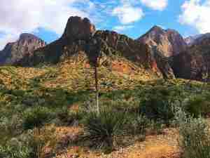 Chisos Mountains with Sotol plant