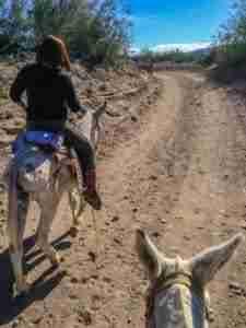riding donkeys to boquillas