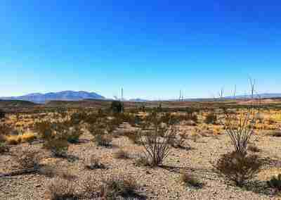 the desert in Big Bend National Park Texas