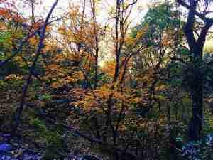 pinacles trail