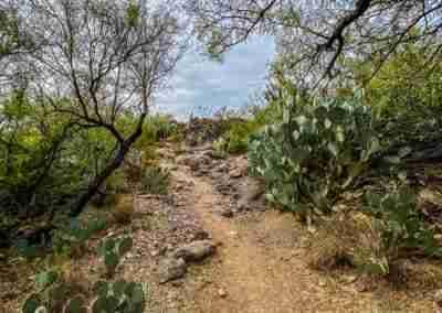 Big_Bend_National_Park_ Mule_Ear_Springs_Trail-04