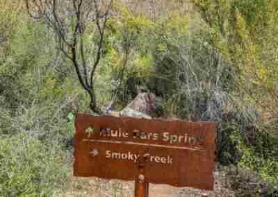 Big_Bend_National_Park_ Mule_Ear_Springs_Trail-05