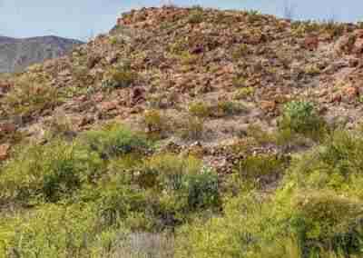 Big_Bend_National_Park_ Mule_Ear_Springs_Trail-06