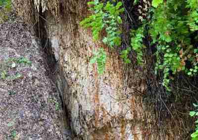 Big_Bend_National_Park_ Mule_Ear_Springs_Trail-07