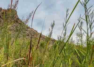 Big_Bend_National_Park_ Mule_Ear_Springs_Trail-09
