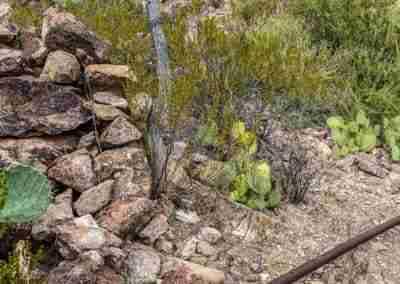 Big_Bend_National_Park_ Mule_Ear_Springs_Trail-10