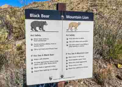 bear and mountain lion sign Pine Canyon Trail in Big Bend National Park